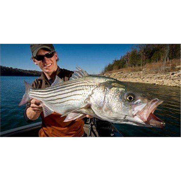 Striped Bass Fishing on Lake Mead