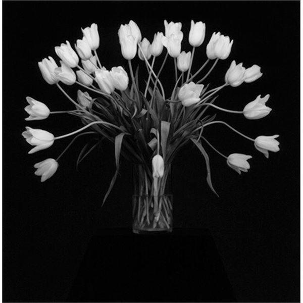 Robert Mapplethorpe Tulips, 1988.