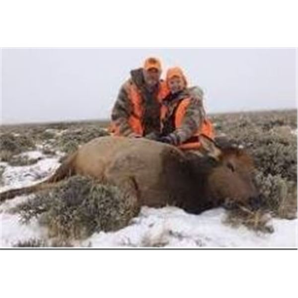 Colorado Cow Elk Hunt 2022