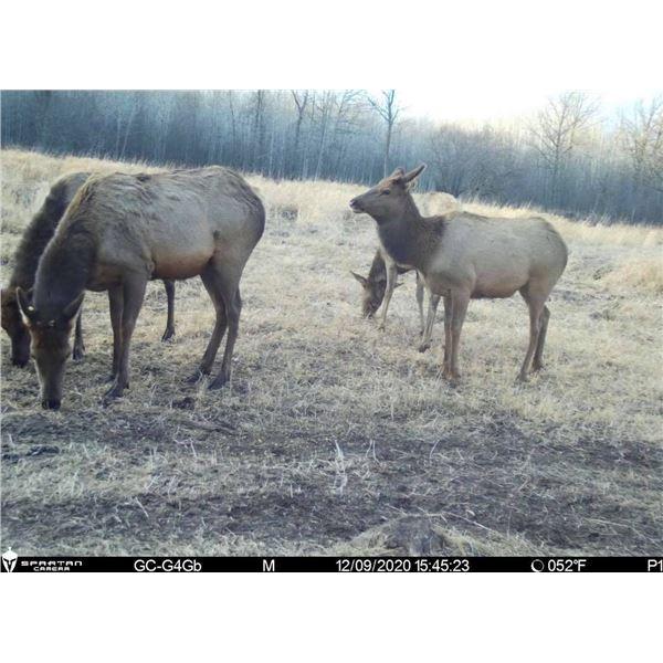 Youth Elk Hunt in Minnesota!