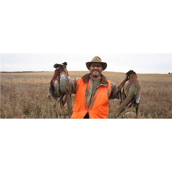 Hunt Pheasants in South Dakota