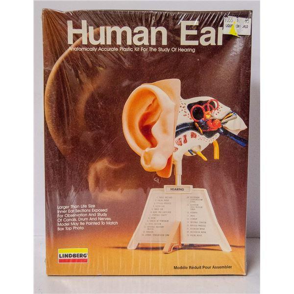 LINDBURG HUMAN EAR MODEL KIT