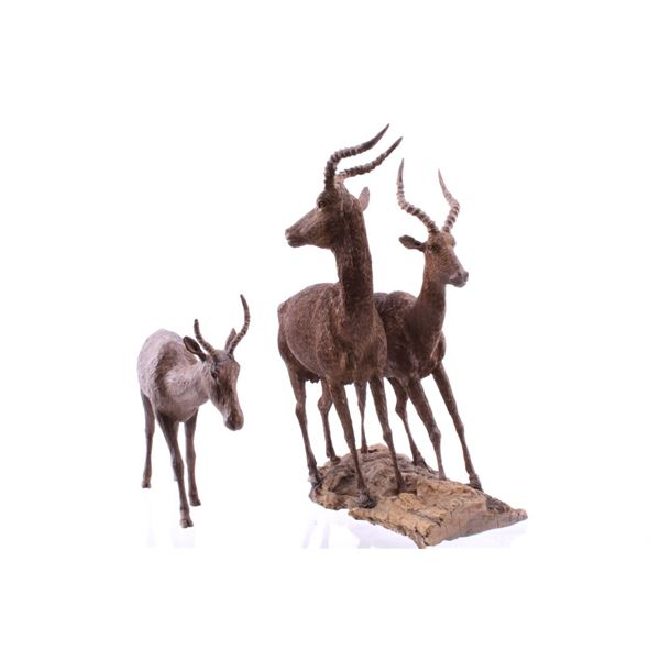 South African Carved Leadwood Impala Collections