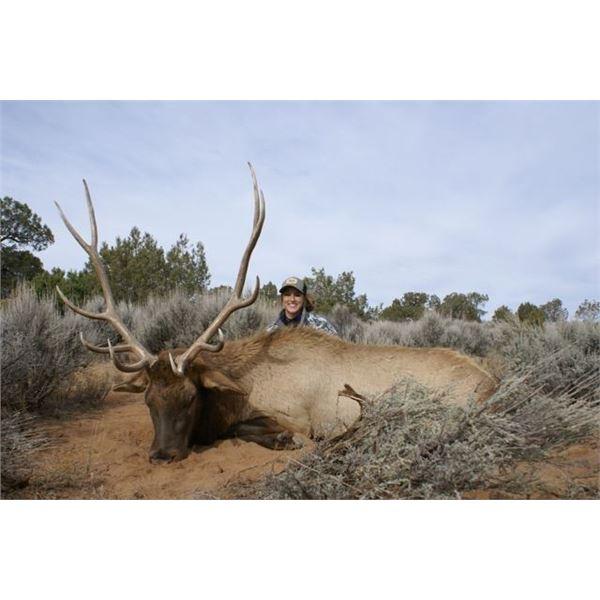 Colorado Guided Archery Bull Elk Hunt