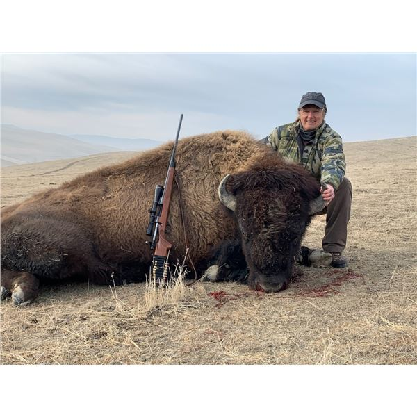 California Buffalo Hunt