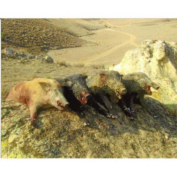 Calif Pig Hunt for 2 Hunters