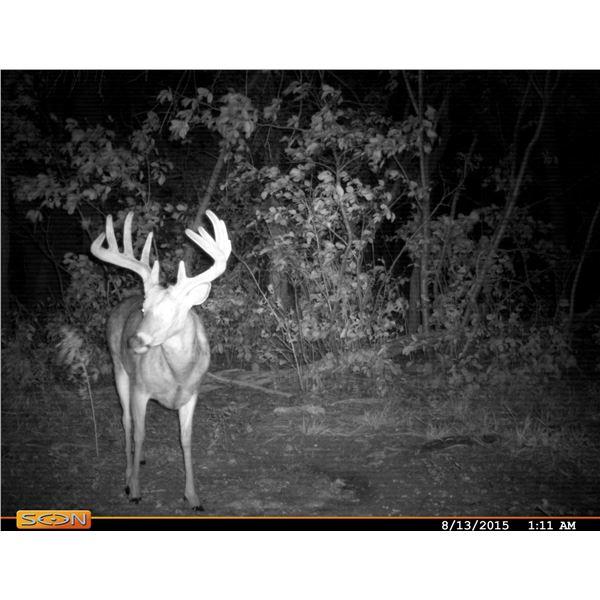 Texas Whitetail Hunt for 2 deer