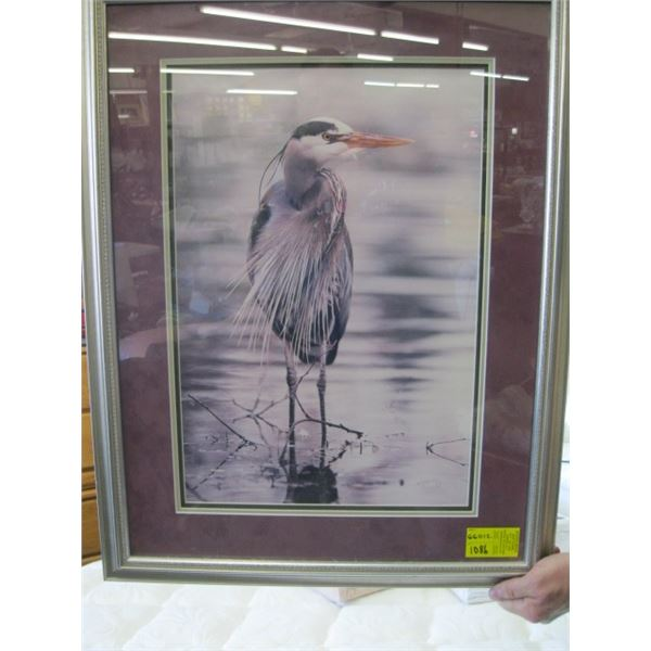 FRAMED PICTURE OF THE UNIQUE LOOKING BIRD