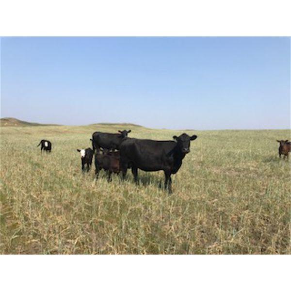 McClintock Ranch - 1350# Pairs - 40 Head (Canopus, SK)