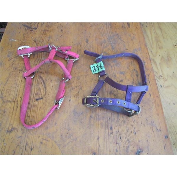 lot of two halters