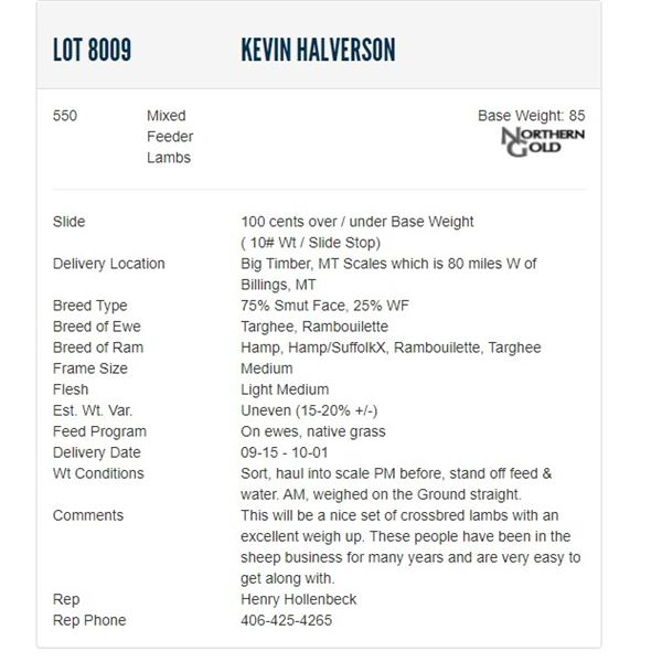Kevin Halverson - 550 Mixed Feeders Lambs; Base Weight: 85LBS