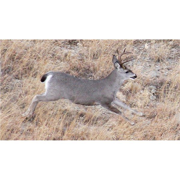 Coues Deer Hunt (Units 23, 24, 26 or 27)