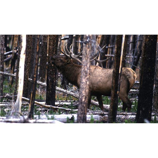 Elk Hunt (Unit 55A Valle Vidal)
