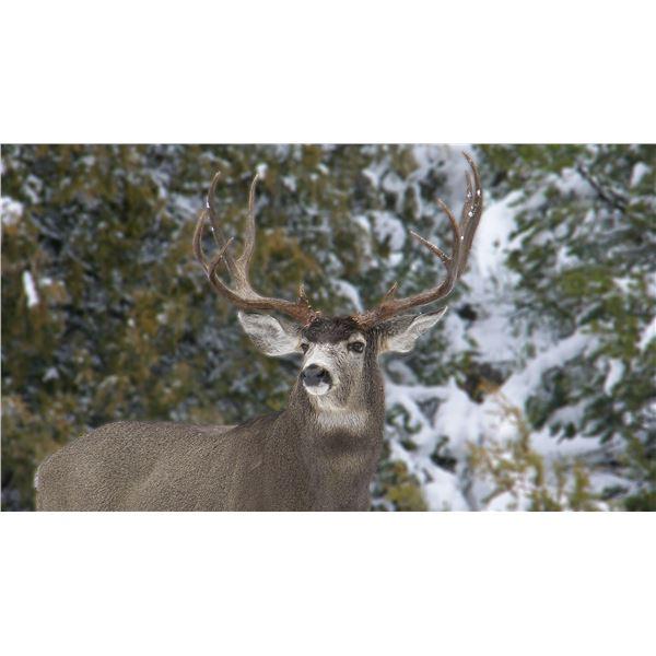 Mule Deer Hunt (Unit 2)