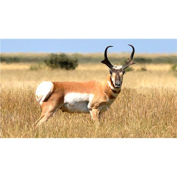 Pronghorn Antelope Hunt (Any open GMU)