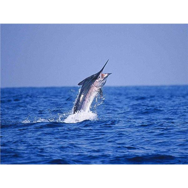 5-Nights/6-Days Sport Fishing Package for 2 with 2 days fishing