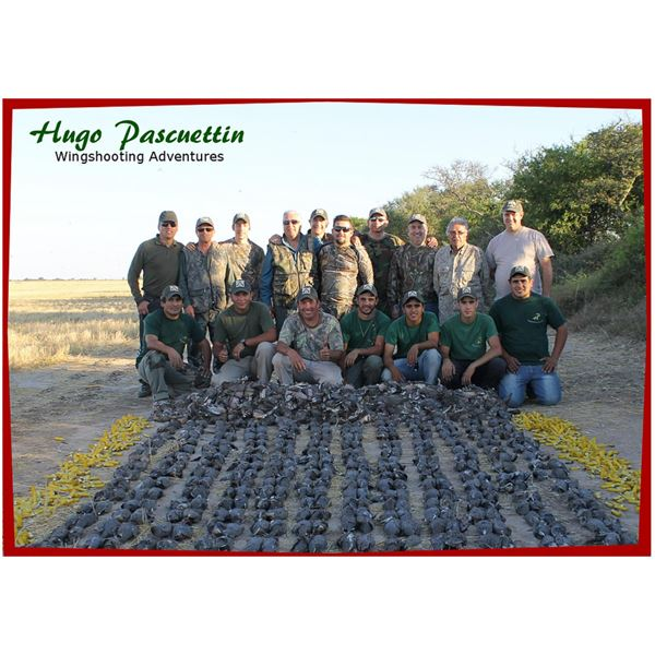 4-Day High Volume Dove Hunt for 4 Hunters