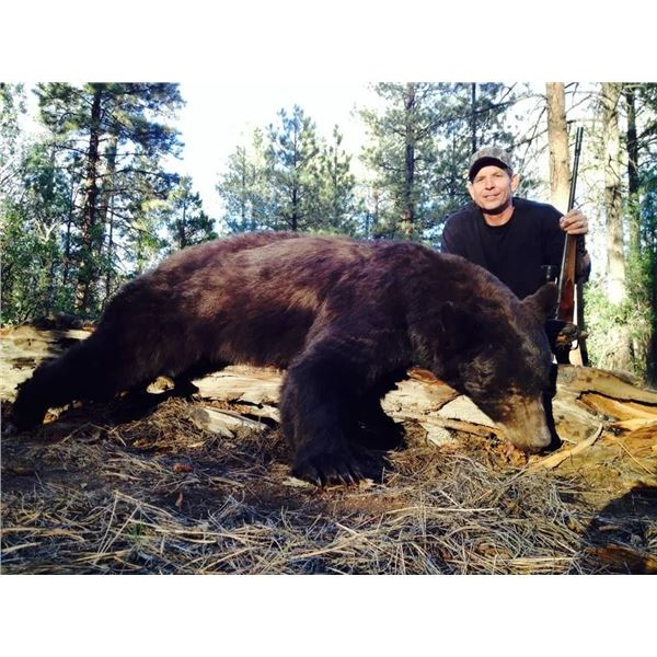 New Mexico Bear Hunt with Dogs