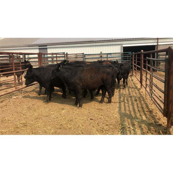 Bryan Glasier - 973# Steers - 17 Head (Pen 39)