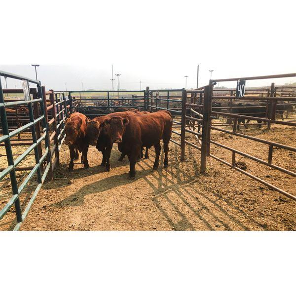 Byron & Michelle Clarke - 911# Steers - 4 Head (Pen 42X)