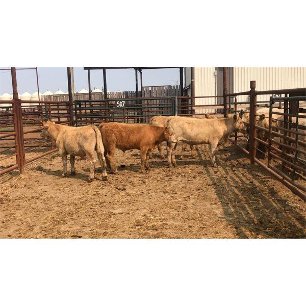 Byron & Michelle Clarke - 589# Steers - 4 Head (Pen 55)