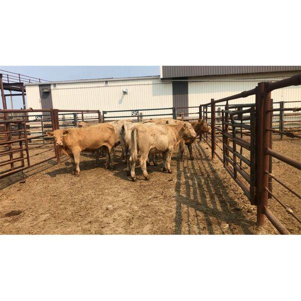 Byron & Michelle Clarke - 770# Steers - 8 Head (Pen 51)