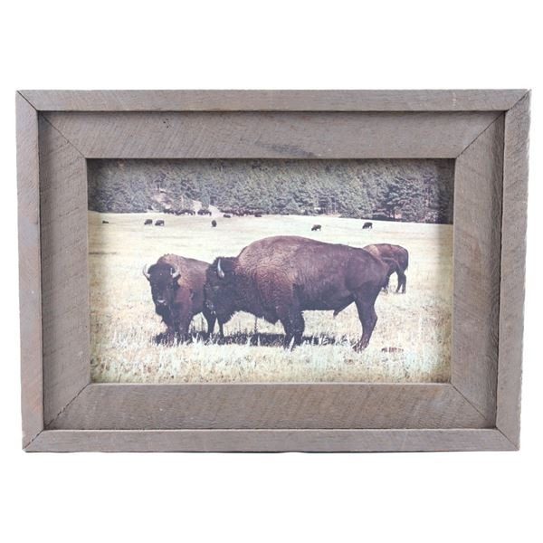 Yellowstone Park Buffalo Framed Photograph