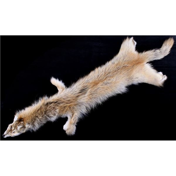 Montana Taxidermy Coyote Fur Pelt