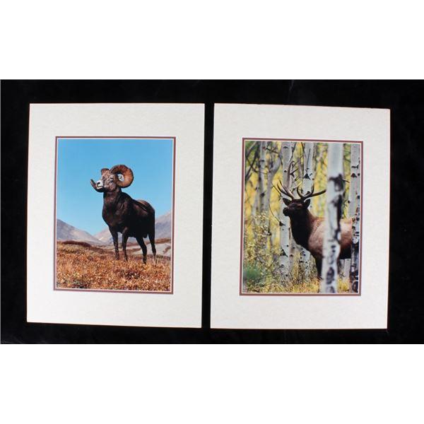 Priest, Bill Elk & Big Horn Sheep Matte Collection