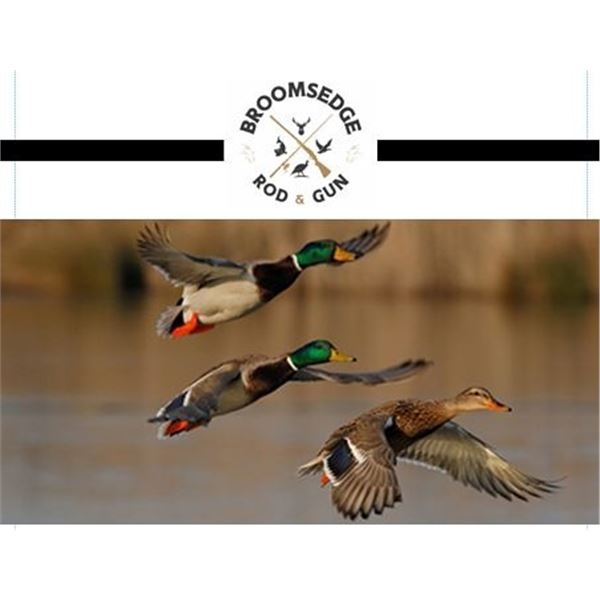 Flighted Mallard Hunt for Four Hunters and Lodging at Broomsedge Rod & Gun