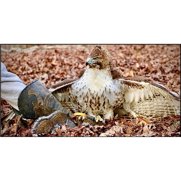Georgia Falconry Hunt for up to 10 People