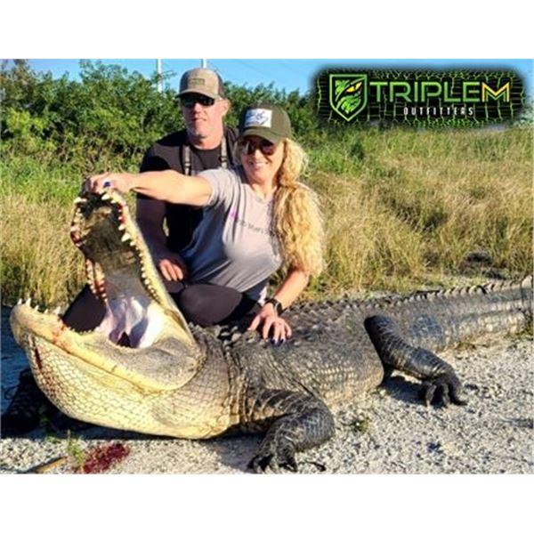 Trophy Alligator Hunt in Florida