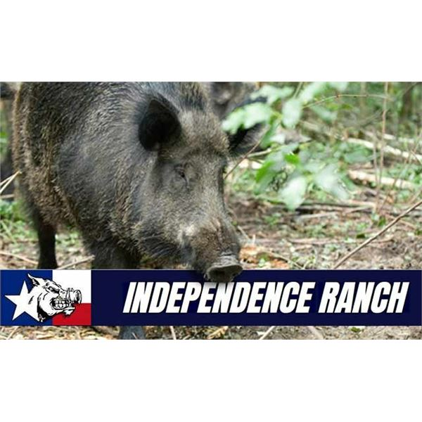 Texas Wild Hog Hunt for Two Hunters