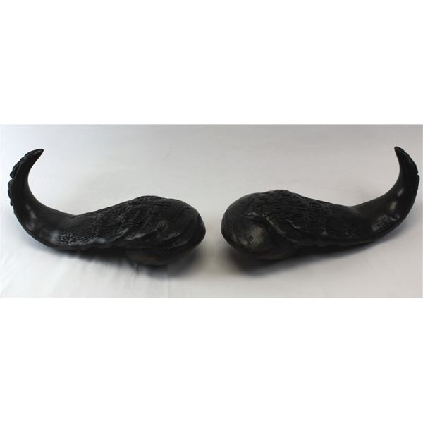 Carved Cape Buffalo Horns