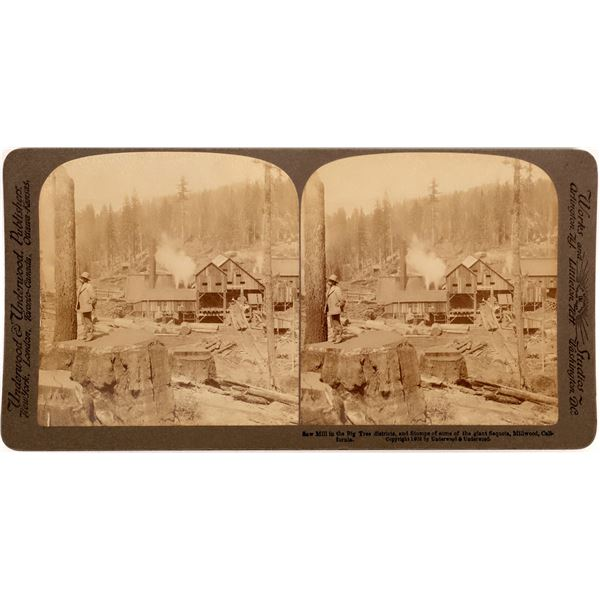 Sawmill in the Big Trees District Stereoview  [136466]