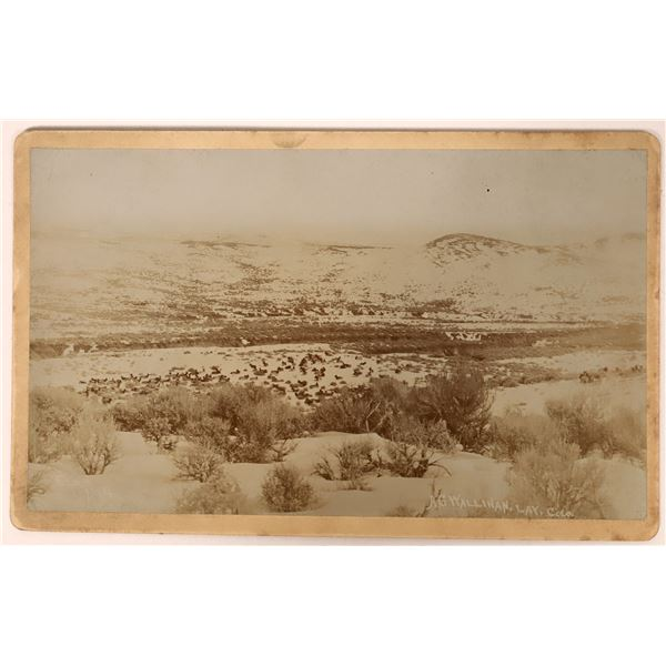 Cabinet Card of Elk Herd in Snow at Lay, Colorado  [135818]