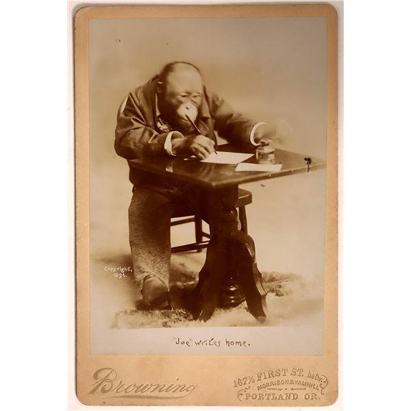 "Cabinet Card of Sideshow Chimpanzee ""Joe""  [135835]"
