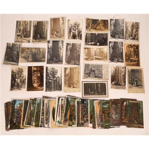 Yosemite Area Postcard Collection (200)  [137928]