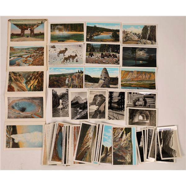 Yellowstone/Glacier Park Postcards & Photographs  [138834]