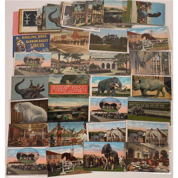 Ringling Bros. & Barnum & Bailey Circus Postcard Collection  [137579]