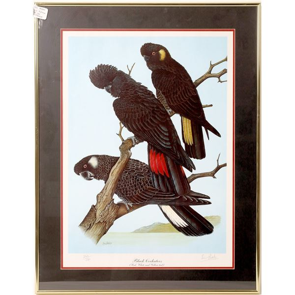 Beautiful Collection of Framed Bird Prints - 3  [135155]