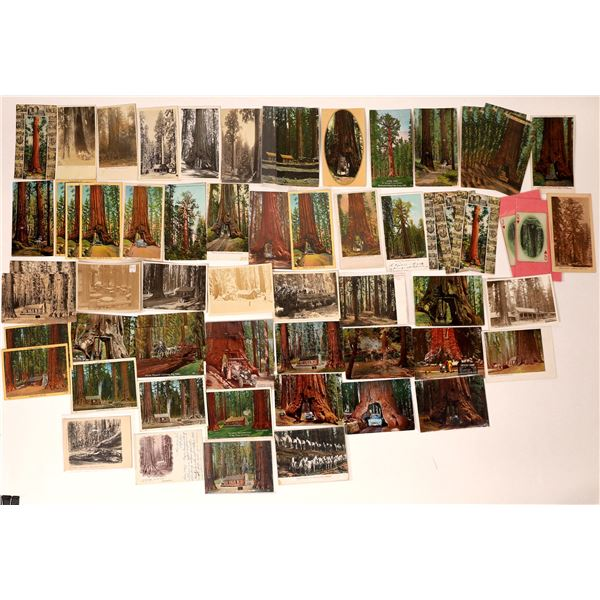 Mariposa Grove Postcard Collection  [132574]