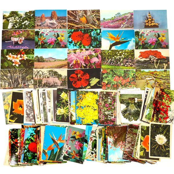 Hawaii Postcard Collection: Flora  [133680]