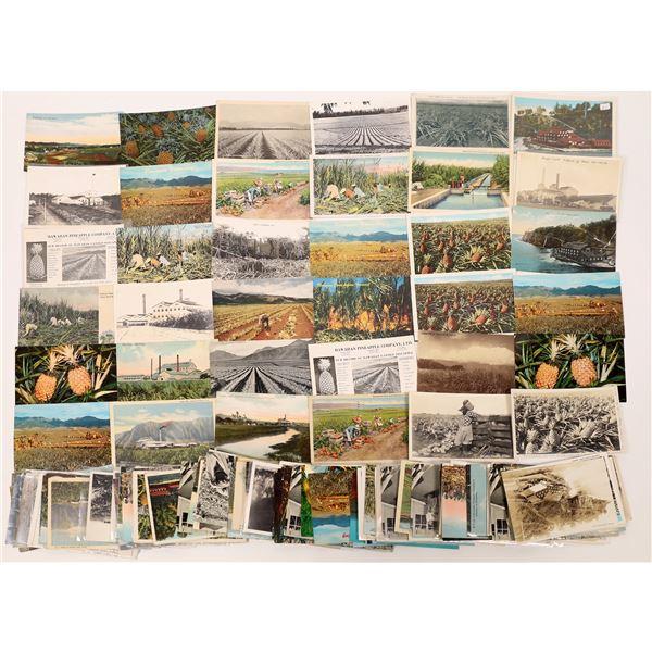 Hawaii Postcard Collection: Plantation Scenes  [133678]
