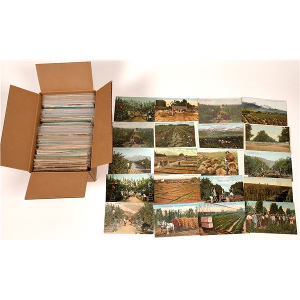 Fruit & Vegetable Agriculture Postcards ~ 350  [138799]
