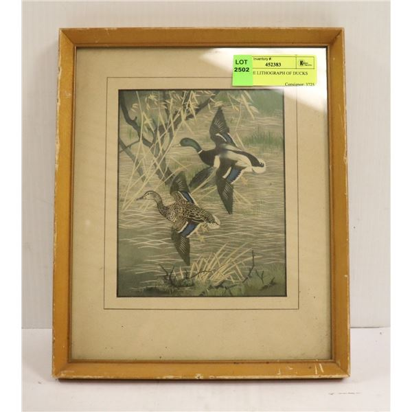 VINTAGE LITHOGRAPH OF DUCKS