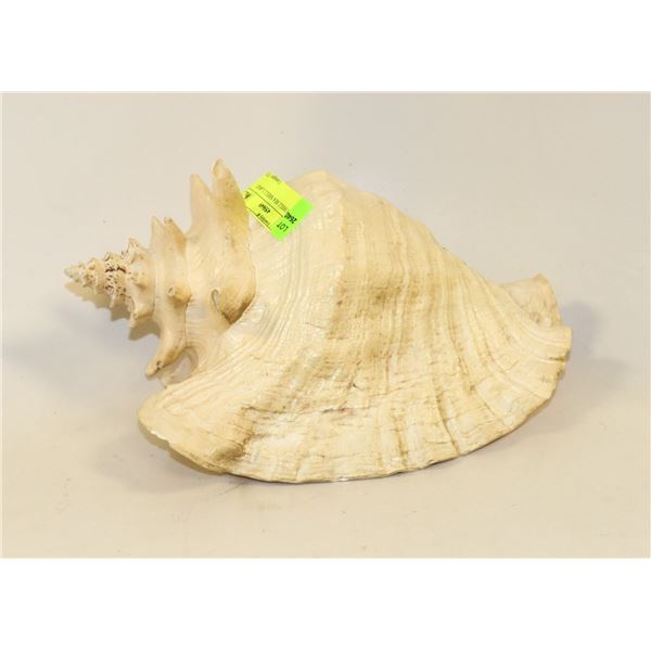 CONCH SHELL SEA SHELL LARGE