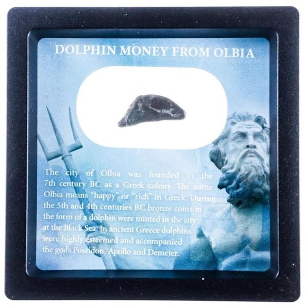 Dolphin Money From Olbia-5th & 4th Century BC  Bronze Coin In Display