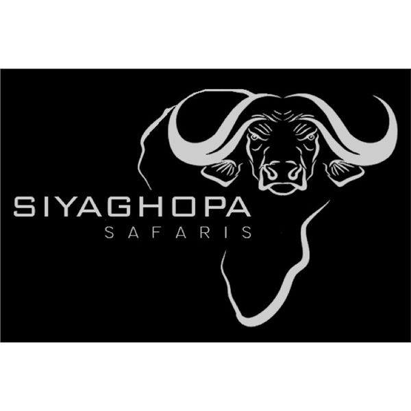 PHASA - Buffalo Cow Hunt, 9 Days in Limpopo