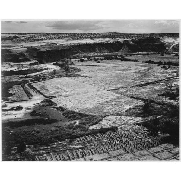 Adams - Corn Field, Indian Farm near Tuba City, Arizona 1941